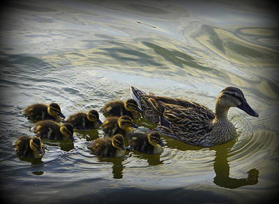 Baby Mallards Photograph - Duck Family by Laurie Perry