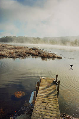 Photograph - Duck Fly In by Emily Stauring