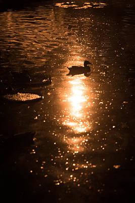 Photograph - Duck Galaxy by Scott Rackers