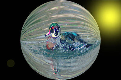 Digital Touch Photograph - Duck In A Bubble  by Jeff Swan