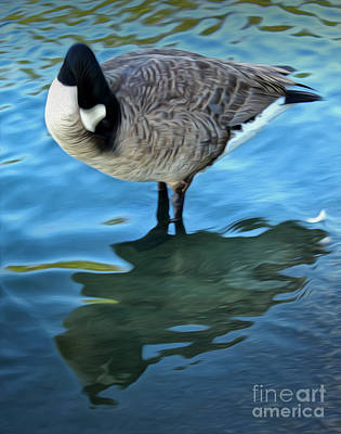 Photograph - Duck In Blue Water by Gregory Dyer