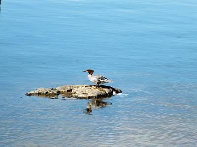Photograph - Duck Island by Gene Cyr