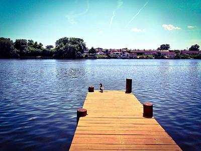 Photograph - Duck On Dock by Chris Montcalmo