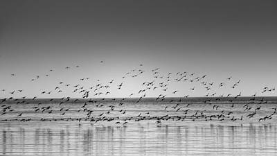 Duck Over Lake 1 B_w Art Print by Peter Scott