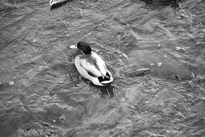 Kitchen Mark Rogan - Duck Pond by Whitney McBride