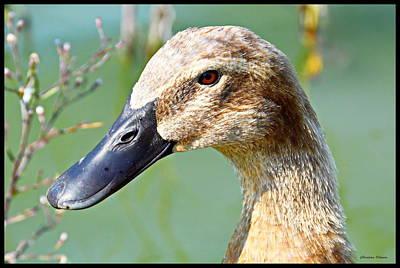 Duck Photograph - Duck Portrait by Christina Ochsner