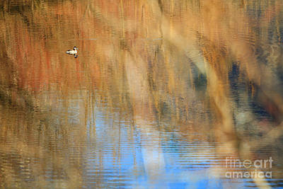 Photograph - Ripple Effect 3 by Michelle Twohig