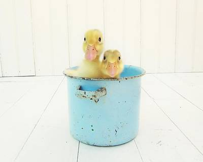 Boys Photograph - Duck Soup by Amy Tyler