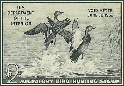 Duck Stamp Migratory Bird Hunting 1951 1952 Gadwall Art Print by Lanjee Chee