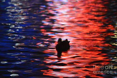 Photograph - Duck Vegas by Brian Boyle