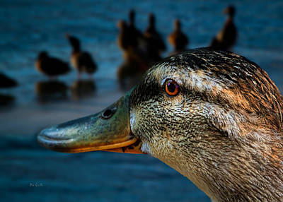 Mallard Photograph - Duck Watching Ducks by Bob Orsillo