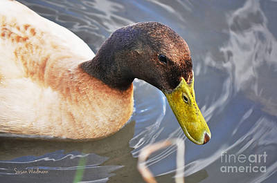 Photograph - Duck With Greenish-yellow Bill by Susan Wiedmann