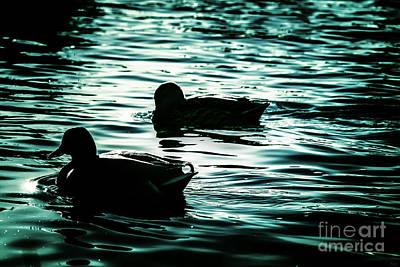 Duckies Art Print