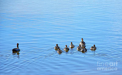 Ducklings Day Out Art Print