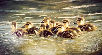 Ducklings Art Print by Kyle Walker