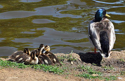 Photograph - Ducklings With Daddy Duck by Susan Wiedmann