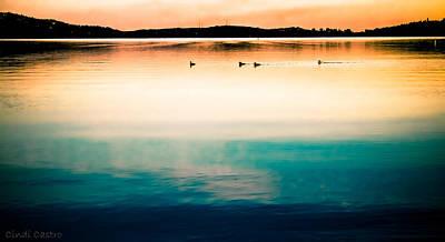 Photograph - Ducks At Dusk by Cindi Castro