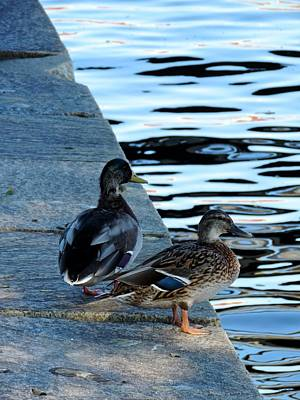 Pop Art - Ducks at Fort McHenry by Doug Swanson