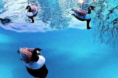Art Print featuring the photograph Ducks At Pond by Marwan Khoury