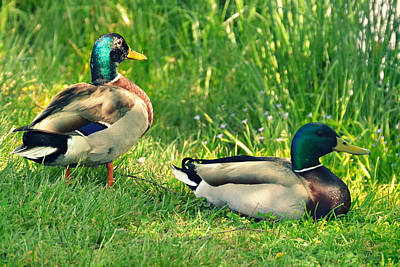 Photograph - Ducks At The Pond by Amber Summerow