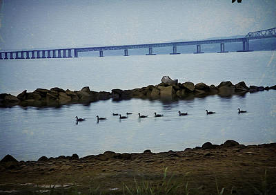 Photograph - Ducks At The Tappan Zee Bridge by Yuri Lev