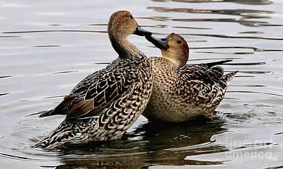Painting - Ducks Beak To Beak by Sue Harper