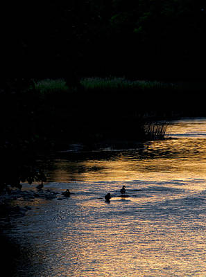 Photograph - Ducks by Celso Bressan