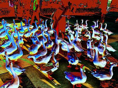Photograph - Ducks Ducks And Ducks-2 by Anand Swaroop Manchiraju