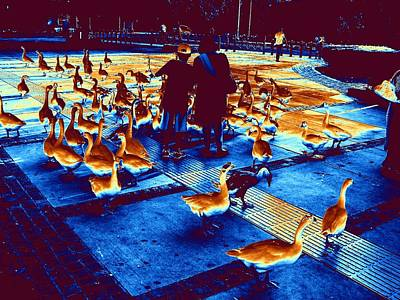 Photograph - Ducks Ducks And Ducks-3 by Anand Swaroop Manchiraju