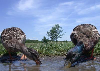 Photograph - Ducks Eye View by Shane Bechler