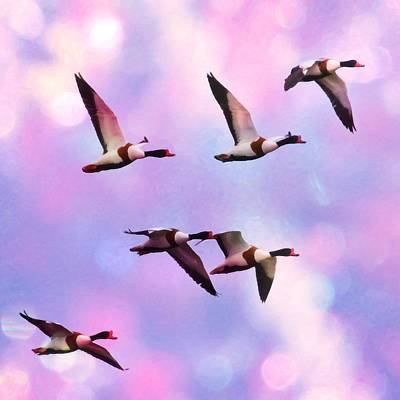 Pigeon Mixed Media - Ducks Flying High In Pink by Tommytechno Sweden