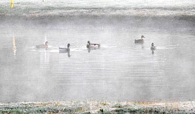 Ducks In Watercolor Painting - Ducks Grey by Anthony George