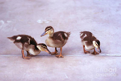 Ducks In A Row Art Print by Clare VanderVeen