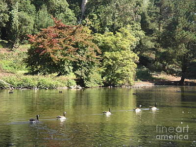 Art Print featuring the photograph Geese In A Row by Cynthia Marcopulos