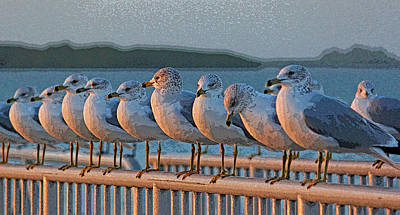 Seagulls Photograph - Ducks In A Row by HH Photography of Florida