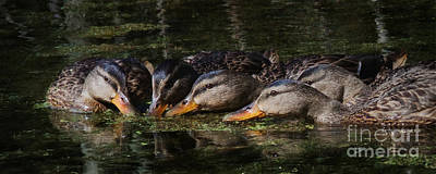 Photograph - Ducks In A Row by Jan Piller