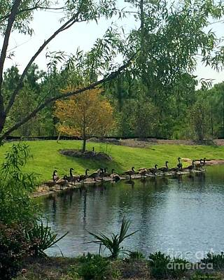 Photograph - Ducks In A Row by Shelia Kempf