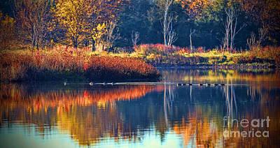 Photograph - Ducks In Paradise by Elizabeth Winter
