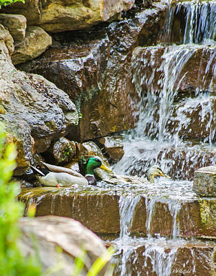 Photograph - Ducks In The Falls by Allen Sheffield