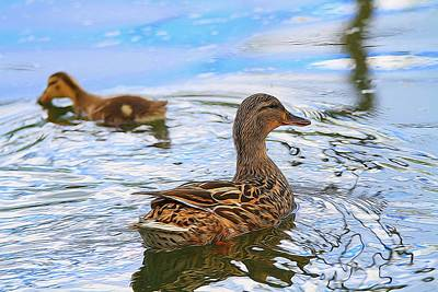 Duck Digital Art - Ducks In The Water by Dan Sproul