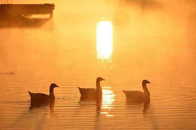 Photograph - Ducks On A Foggy Lake At Sunrise by Shey Stitt