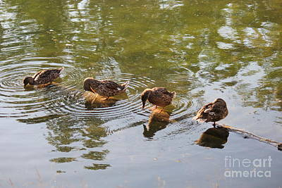 Photograph - Ducks On A Log by Donna L Munro