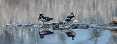 Photograph - Ducks On A Log by Randy Hall