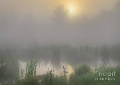Sloughs Photograph - Ducks On A Pond by Dan Jurak