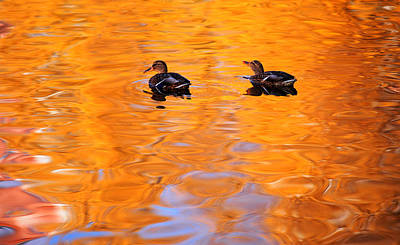 Animals Photos - Ducks on the Golden Waters by Jenny Rainbow