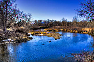 Photograph - Ducks On The River by David Patterson