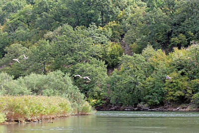 Photograph - Ducks Over River Ropotamo by Tony Murtagh