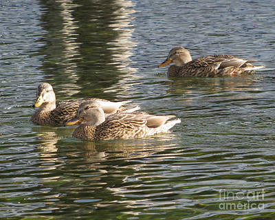 Photograph - Ducks Sunning by Leone Lund