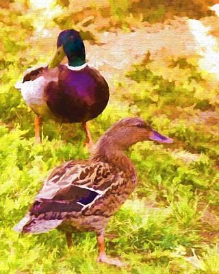 Photograph - Ducks - Mallards - Ducky Day by Barry Jones