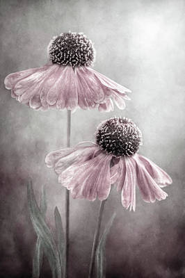 Floral Still Life Photograph - Duet by Mandy Disher